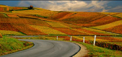 Route de Champagne close to Epernay - © Vincent Brassinne, Creative Commons licence