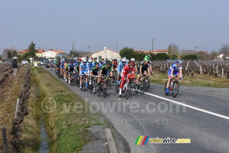 The peloton in the wineyards