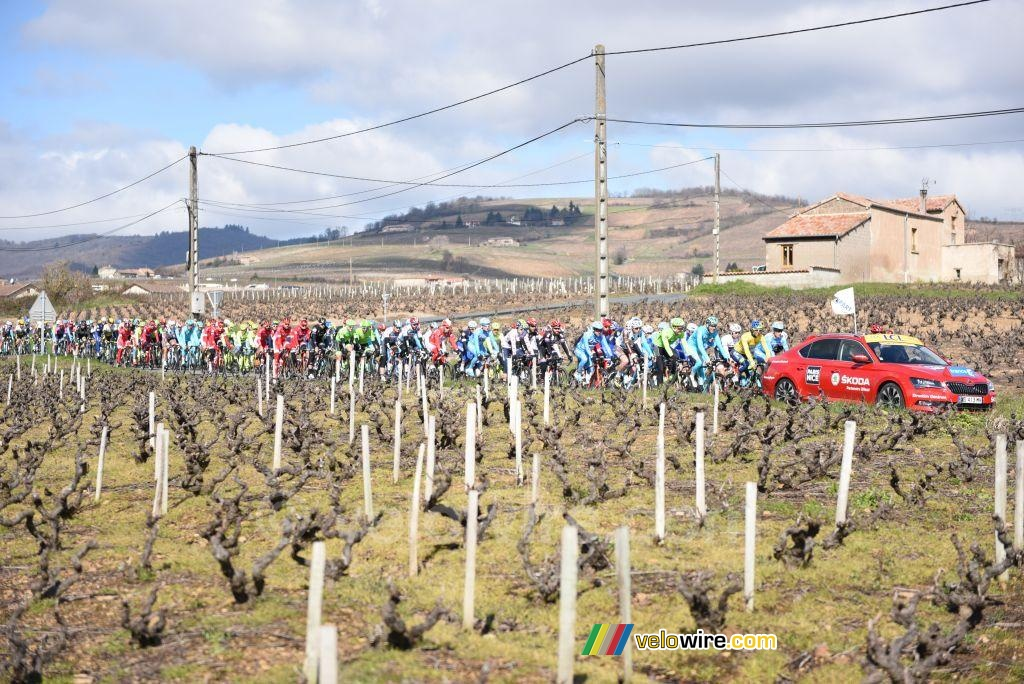 The peloton in the wineyards at the start