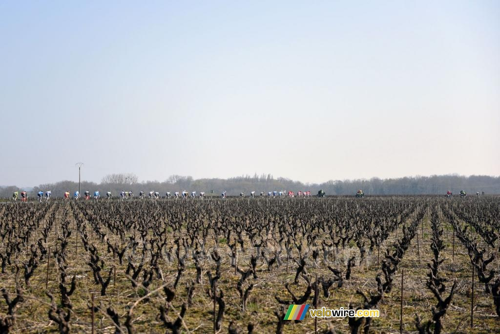 The peloton in the wineyards (2)